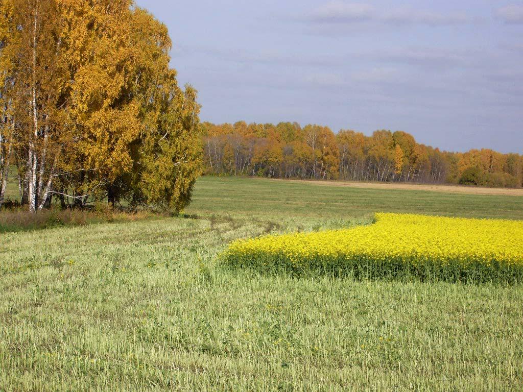 Фото природа кузбасса фото природа